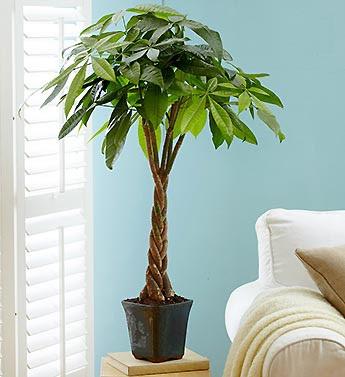 - Mệnh mộc nên trồng các loại cây