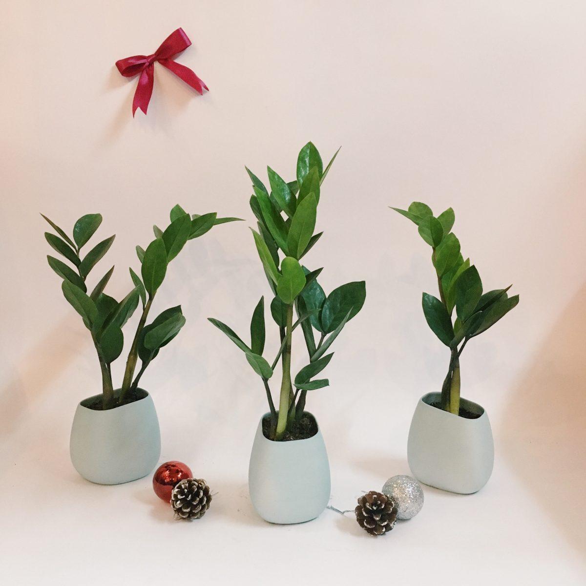 - Mệnh thủy nên trồng các loại cây
